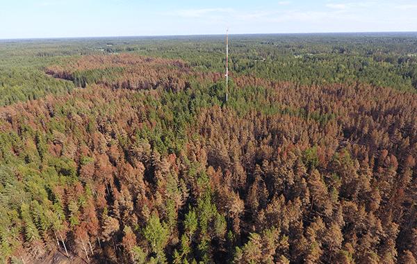 Ilmakuva laajasta metsäalueesta. Metsän keskellä linkkimasto.