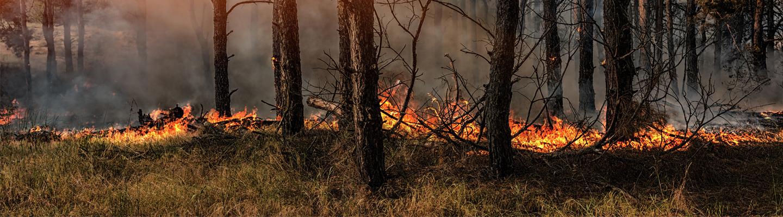 Metsäpalo.