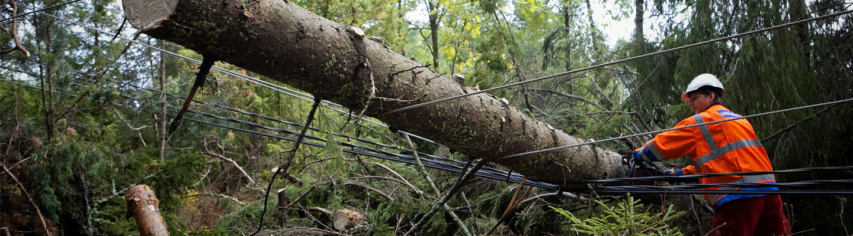 Metsuri raivaamassa sähkölinjan päälle kaatunutta puuta.