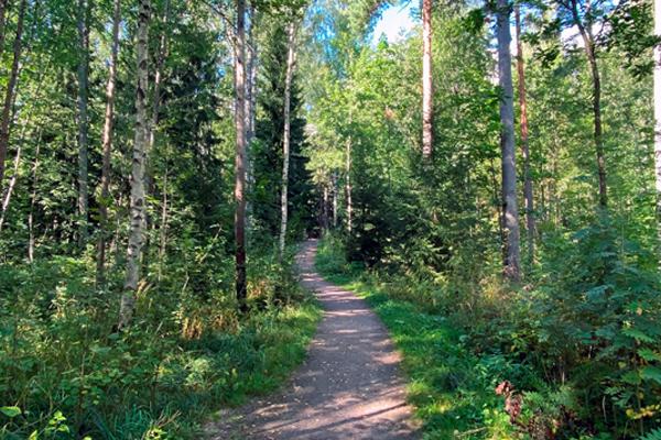 Polku vie metsän halki.